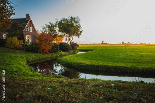 Green  fields of Friesland province, sunshine in evening.