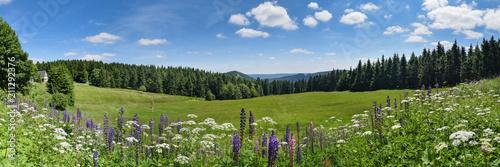 Turyński las w lecie z halną łąką