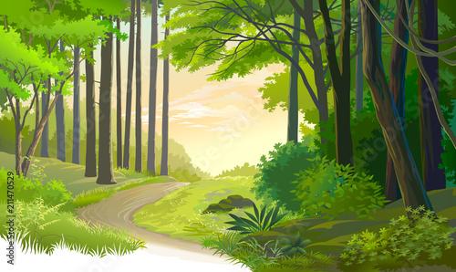 Obraz premium Stara ścieżka przez starożytny las