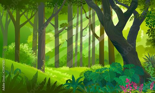 Obraz premium Bujny, gęsty zielony las z promieniami słońca dotykającymi roślin i drzew