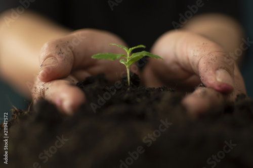 Photo Hand gently holding rich soil for his marijuana plants