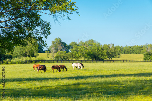 Horses at green pastures of horse farms.