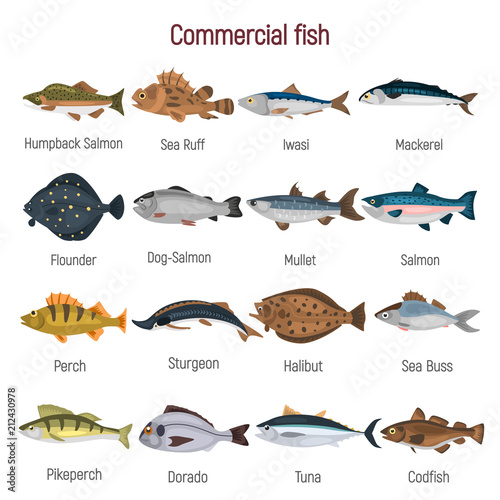 Wallpaper Mural Commercial fish of the world color icons set isolated on white
