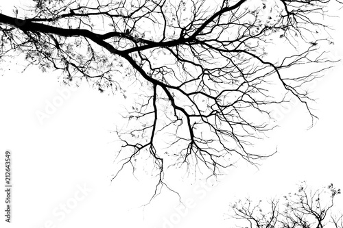 Tela Bare tree branches on a pale white background