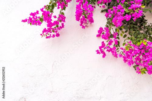 Cuadros en Lienzo beautiful spanish Bougainvillea flowers on white wall