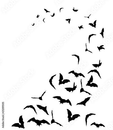 Foto Flying bats in the sky