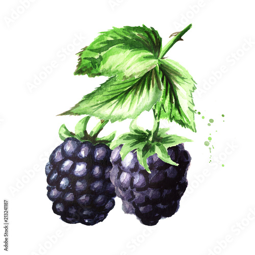 Wallpaper Mural Brunch of two ripe blackberries with green leaves