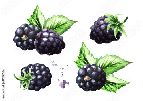Photo Ripe blackberries with green leaves set