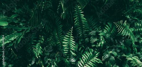 Naklejka na szafę Tropikalny zielony liść w ciemnym odcieniu do przedpokoju