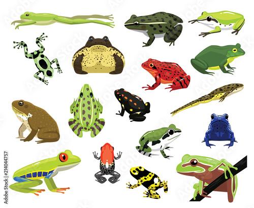 Fototapeta premium Różne żaby kreskówka wektor ilustracja
