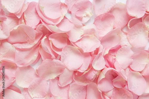 Wallpaper Mural pink rose petals