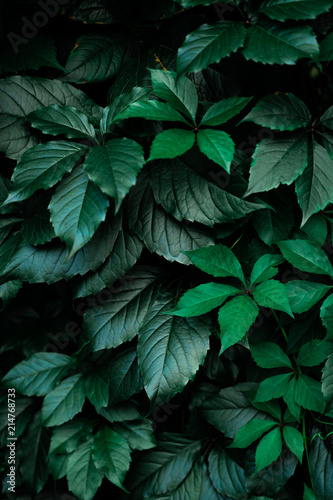 dark green foliage leaf background
