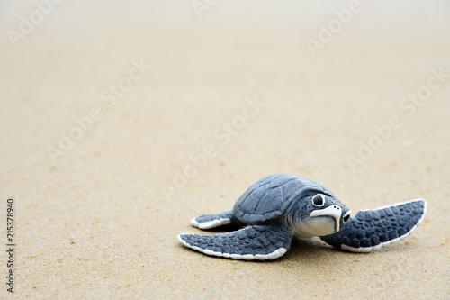 Obraz na płótnie Little turtle on the beach,Copy space.