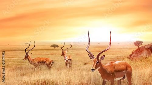 Samotna antylopa w afrykańskiej sawannie przed pięknym zachodem słońca. Afrykański krajobraz. Park Narodowy Serengeti.