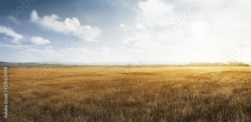 Obraz na plátně Landscape view of dry savanna