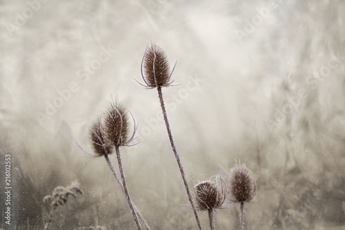 Winter frosted flower