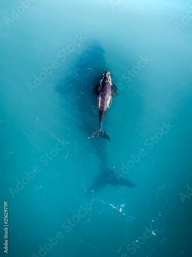 Leinwand Poster Australia - Whales 01