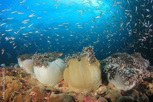 Fototapeta premium Underwater coral reef