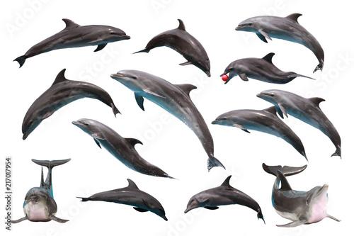 Canvas Set of Bottlenose Dolphin on white isolated background