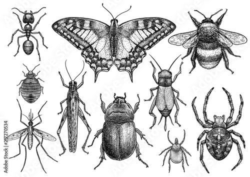Insect collection illustration, drawing, engraving, ink, line art, vector Fotobehang