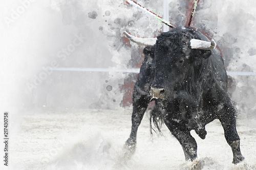 Watercolor, Bullfight. Fighting bull picture from Spain. Black bull
