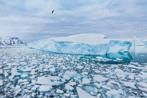 Antarctica nature beautiful landscape, bird flying over icebergs
