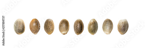 Canvas Print Close up of hemp seeds arranged in a straight line isolated on white background