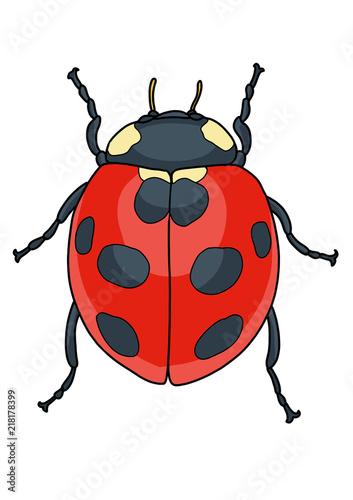 Fototapeta premium Ladybug illustration, doodle, cartoon, drawing, ink, line art, vector