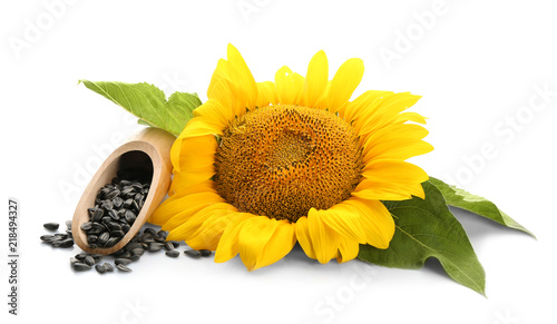 Sunflower with leaves and seeds on white background