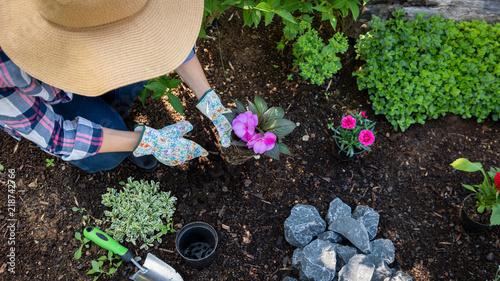 Valokuva Unrecognizable female gardener planting flowers in her garden