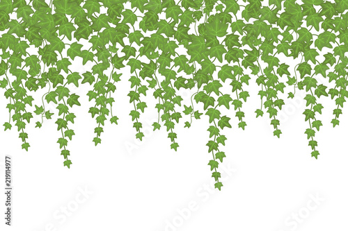 Fotografia Green ivy wall climbing plant hanging from above