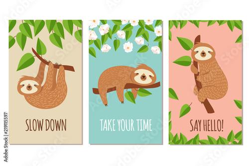 Wallpaper Mural Lazy sloth