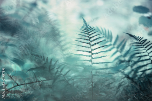 Forest artistic turquoise colored blurry fern plants in morning sunlight. Selective focus used.