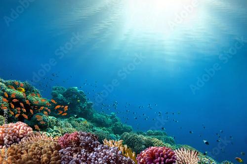 Fotografia Underwater coral reef background