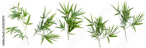 bamboo isolated on white background Fototapeta