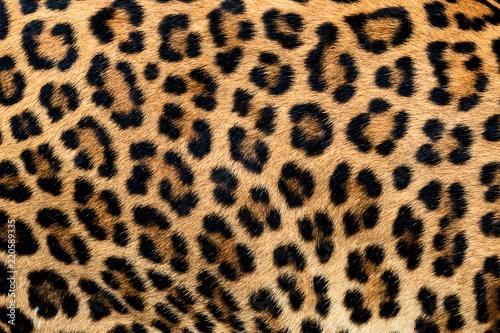Stampa su Tela Detail skin of leopard.
