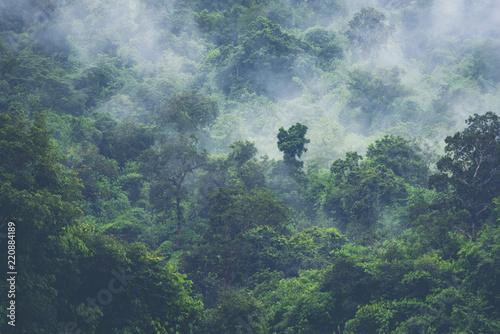 deep tropical forest, canopy tree and fog Fototapeta