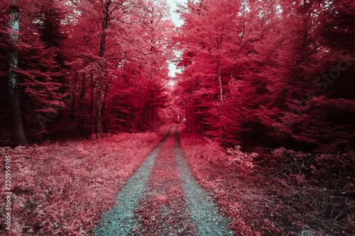 Photo Chemin forestier en infrarouge