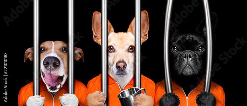 Fotografia dogs behind bars in jail prison