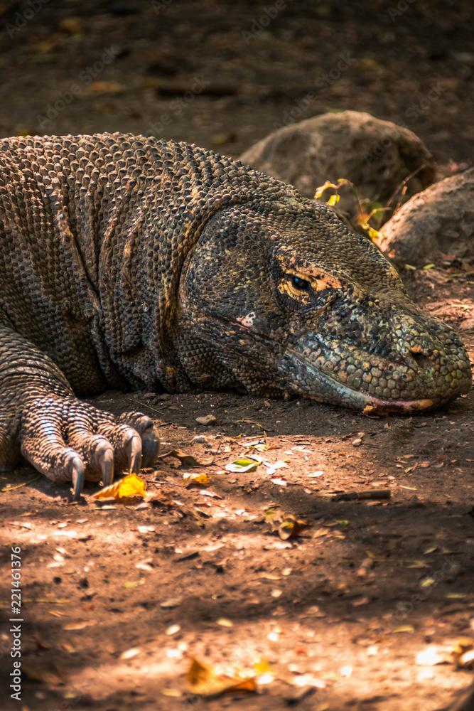 Dragones de Komodo en la isla de Rincca, Indonesia. - obrazy, fototapety, plakaty