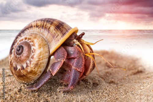 Fotografie, Tablou Colorful hermit crab on the beach.