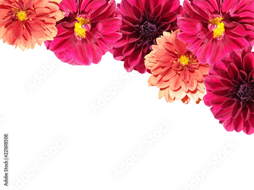 Beautiful floral background of dahlias