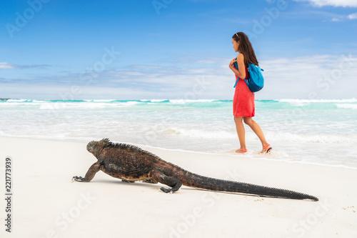 Galapagos wildlife marine iguana walking on Tortuga Bay beach in Santa Cruz island with tourist woman in background. Galapagos islands travel vacation.
