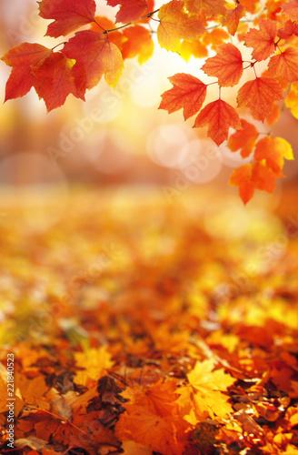 Jesienne liście na słońcu.
