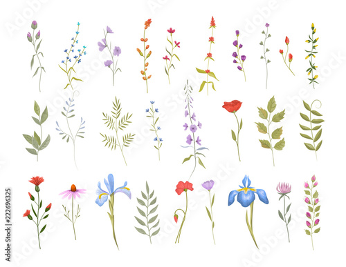 Wallpaper Mural Collection of wild flowers. Set of floral elements