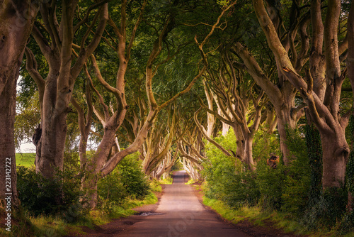 Foto The Dark Hedges in Northern Ireland at sunset