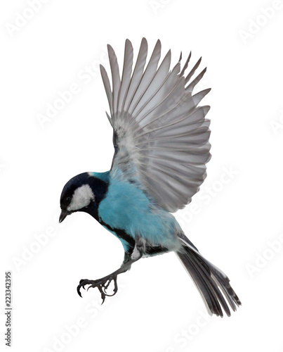 Wallpaper Mural isolated fast blue tit in flight