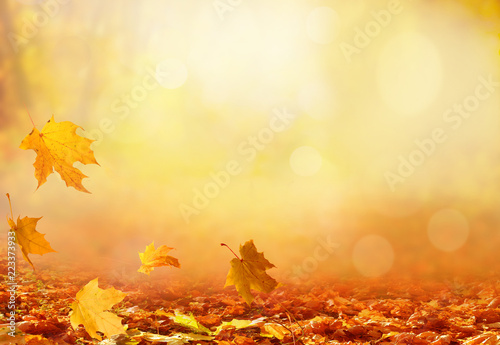 Piękny jesień krajobraz z żółtymi drzewami i słońcem. Kolorowe liście w parku. Spadające liście naturalne tło