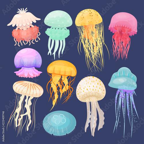 Fototapeta premium Meduza morska jasno osadzona na ciemnoniebieskim tle