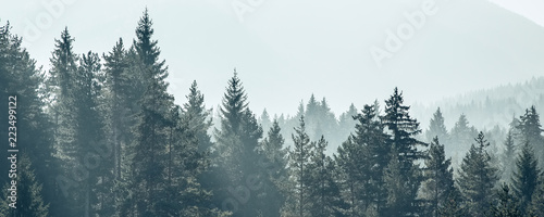 Fototapeta premium Sosna drzewa las stylizowane sylwetka tło transparent